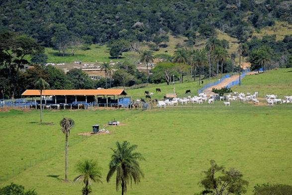 Falta de mão de obra rural no Brasil