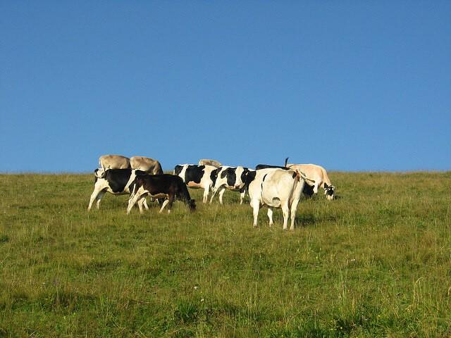 Como acabar com a verminose em bovinos