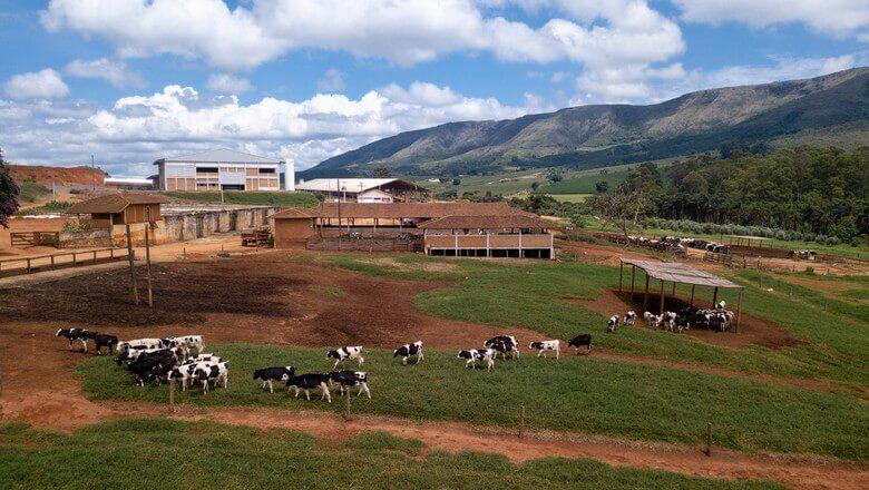 Seguro rural: saiba tudo