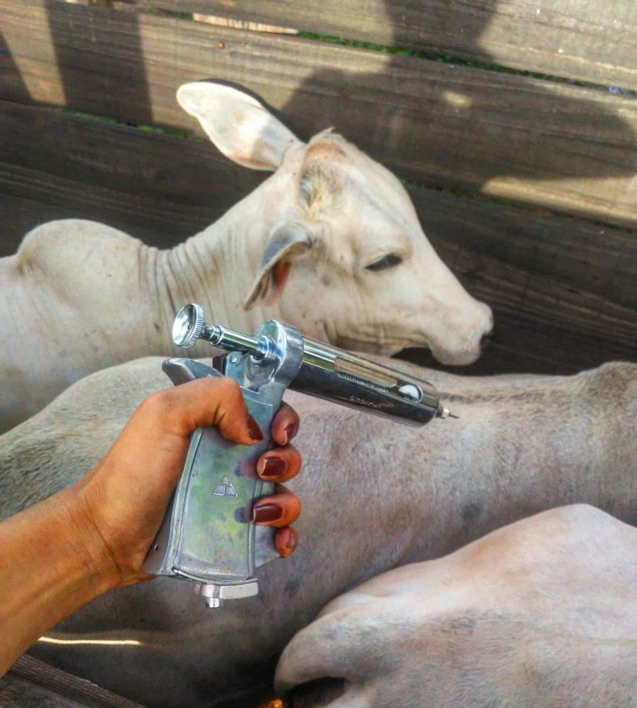 Programar a vacinação contra a aftosa está entre as boas práticas da pecuária. Foto: Sarah Barros