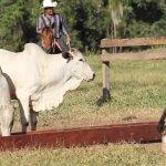 Uso de enxofre para gado