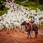 Vermífugo para bovinos cria resistência?