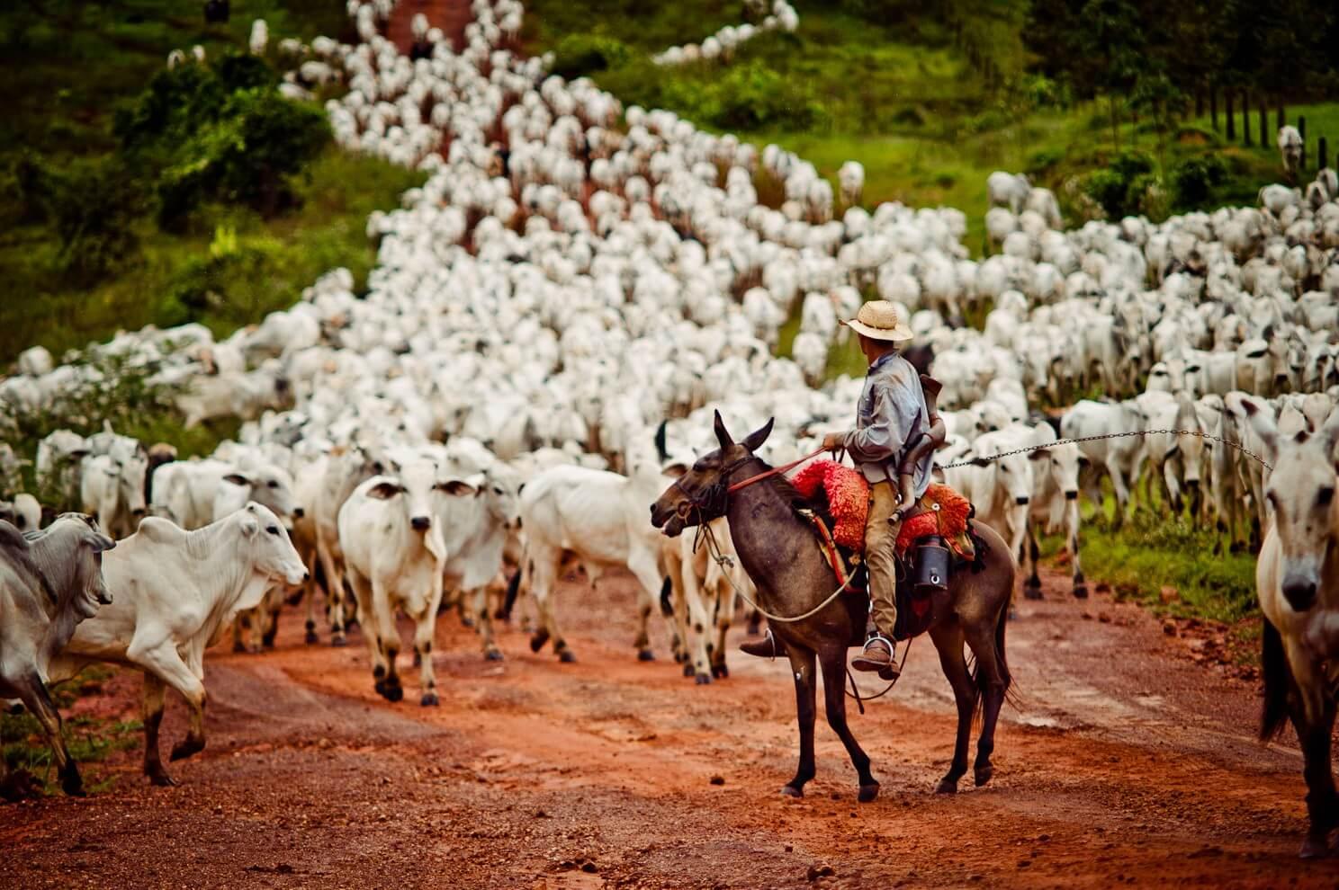 Como ter engajamento da equipe na pecuária