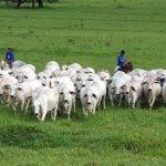 Criação de gado: 7 dicas para iniciar com sucesso