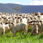 Como melhorar a eficiência na atividade pecuária