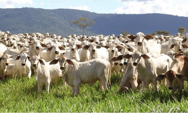Projeções das atividades sobre pecuária em 2017