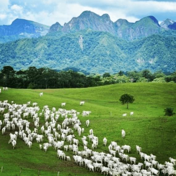 propriedade ideal para a pecuária no Brasil