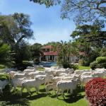 Cria, recria e engorda: entenda as fases da pecuária