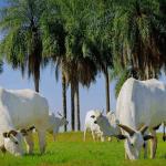 Como implementar uma melhor gestão rural na pecuária?
