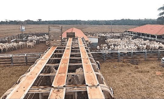 Nutrição ideal para confinamento de gado de corte