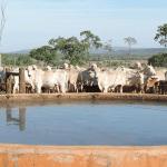 Como manter a água limpa no bebedouro de gado