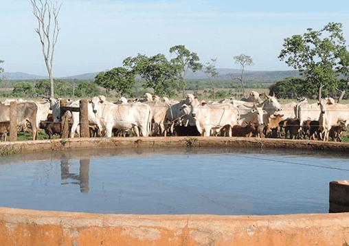 Como manter a água do bebedouro de gado limpa