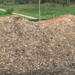 Como fazer o descarte de carcaças de bovinos?