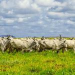 Doenças de pele mais comuns em bovinos