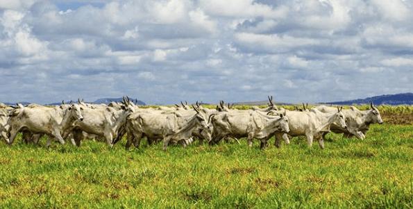 Doenças de pele mais comuns em bovinos podem ser prevenidas no cocho.