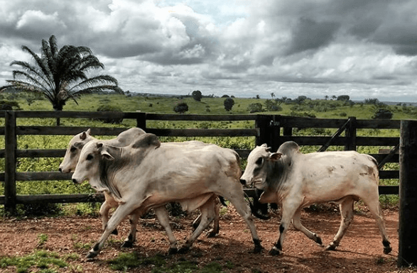 Farelo de soja para gado