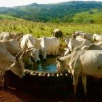 Onde instalar o bebedouro para bovinos?