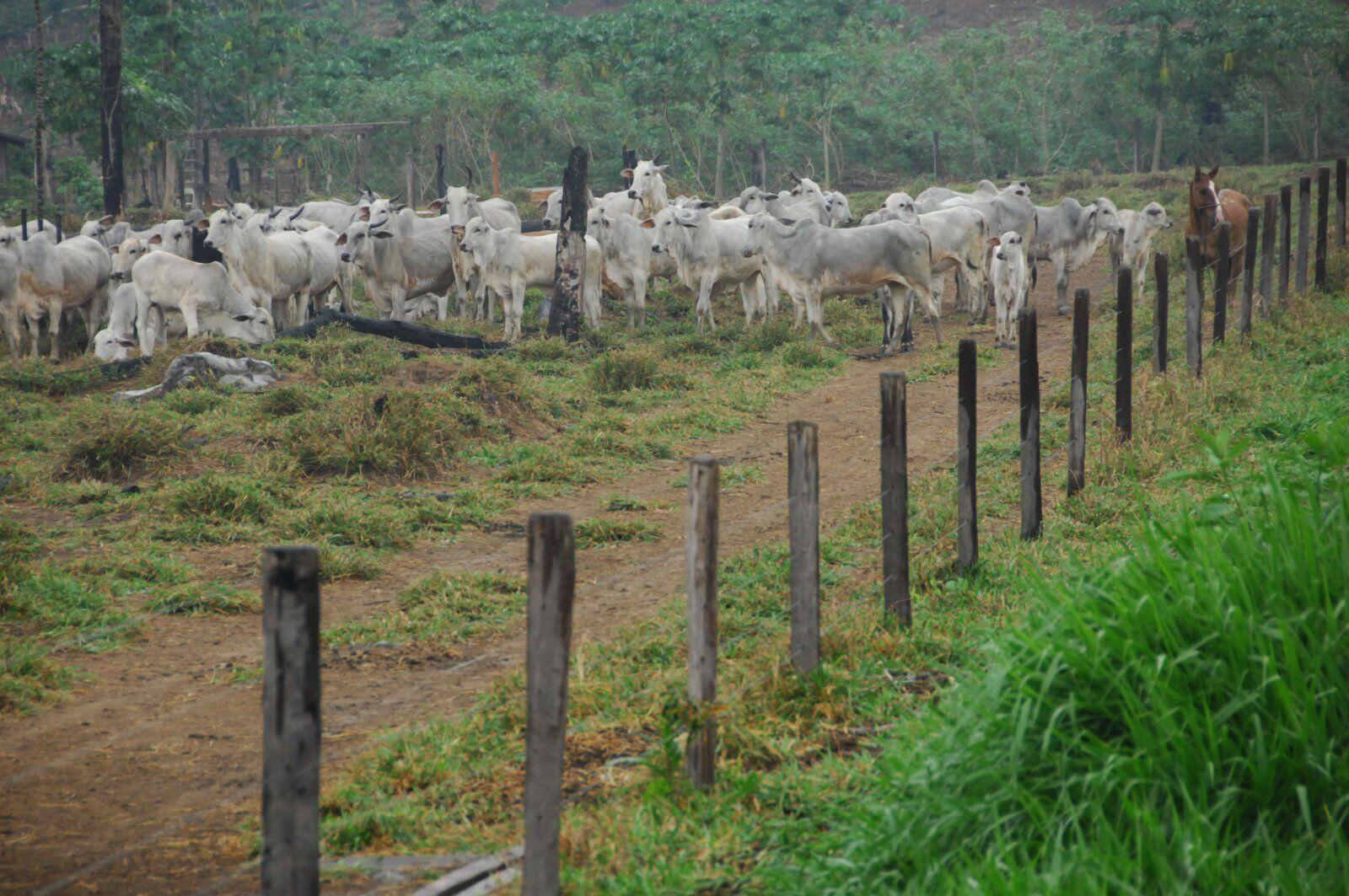 Como reduzir o custo da cerca para gado sem segredo