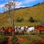 Você sabe como fazer consulta de imóvel rural?