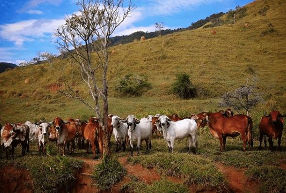consulta imóvel rural