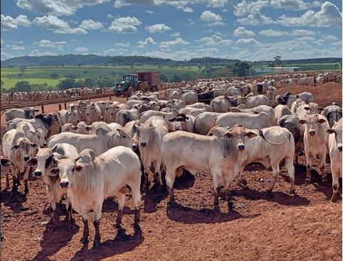 seguro de gado