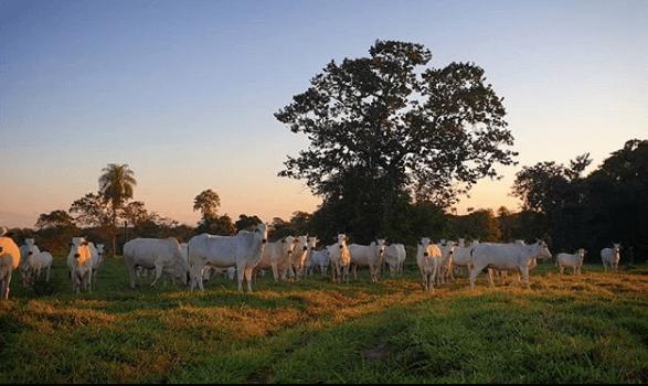 silagem para bovinos