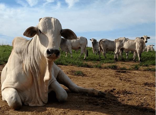 doença vaca louca