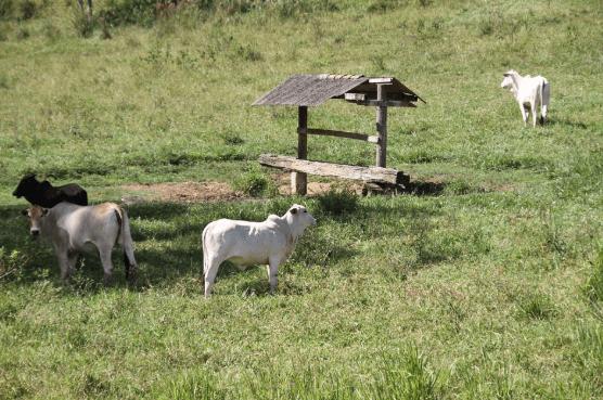 Tempo de armazenamento do sal mineral para gado de corte
