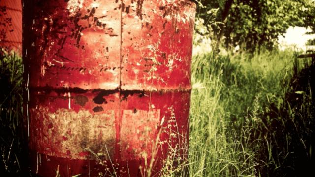Botulismo bovino: a intoxicação causada por bactérias
