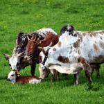 Descarte correto de embalagens de agrotóxicos e medicamentos bovinos