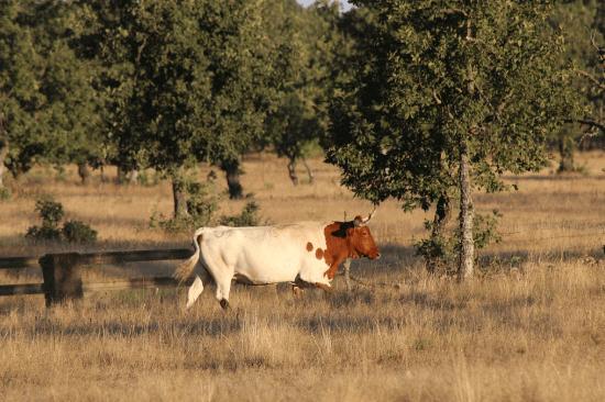 bovinos alimentação