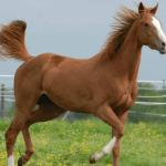Como aplicar soro em equinos?