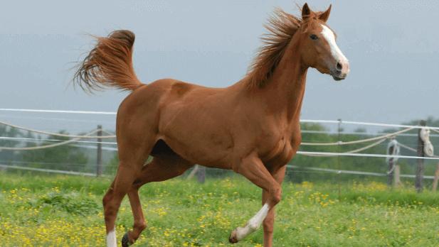 como aplicar soro em equinos