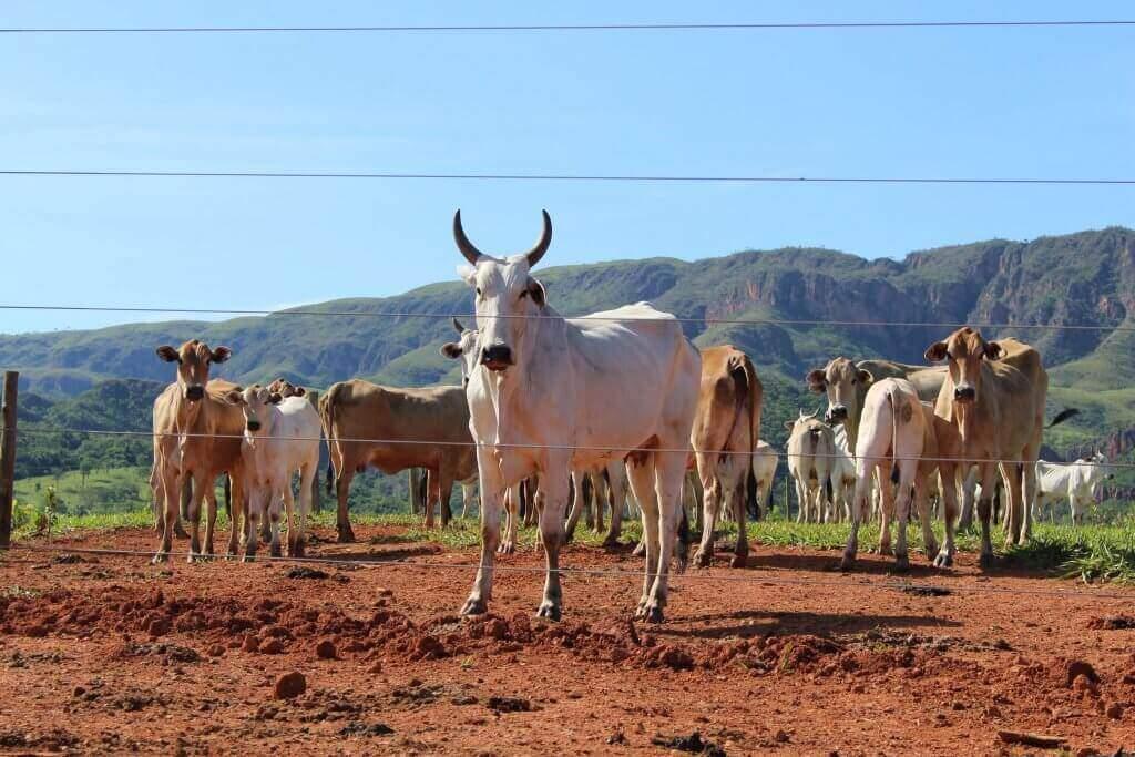 Crédito rural é alternativa para produtores de todos os portes