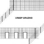 Creep grazing e creep feeding: importância e diferenças