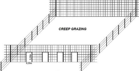 A importância e a diferença do creep feeding e creep grazing