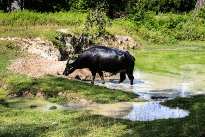Atuar com economia da água na pecuária é preservar o meio ambiente