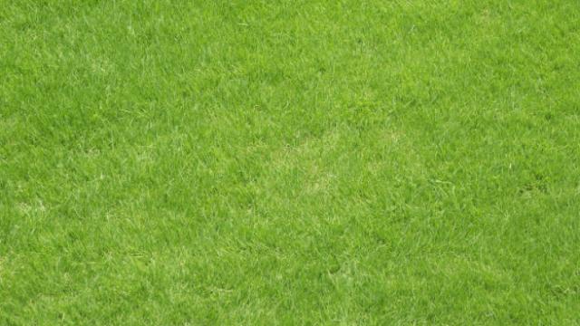 Fertilizante natural feito na propriedade: confira a receita