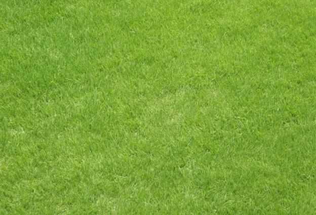 Aprenda a fazer fertilizante natural