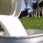 Como aumentar a gordura do leite?