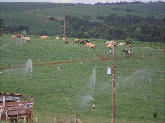 Dicas para suprir a falta de irrigação de pastagem