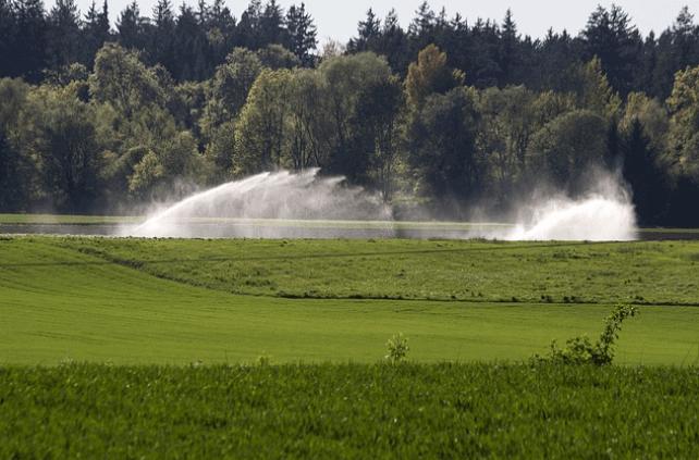 Irrigação de pastagens no período seca elimina gastos com suplementos
