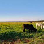Quantidade de matéria seca consumida por dia no pasto