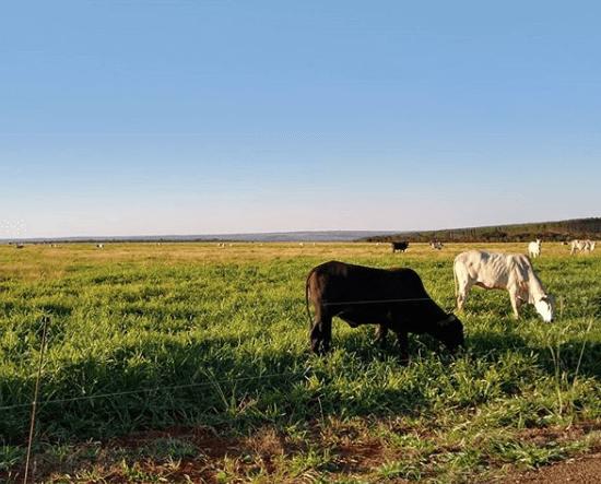 matéria seca no pasto