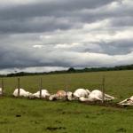 Como evitar boi morto por raio na propriedade rural?
