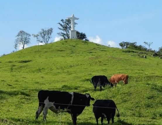 Pastagem em área de morro deve ter preparação especial
