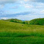 Formação de pastagem em terras pouco férteis