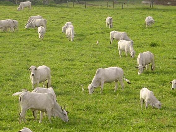Pecuária orgânica está em crescimento no Brasil