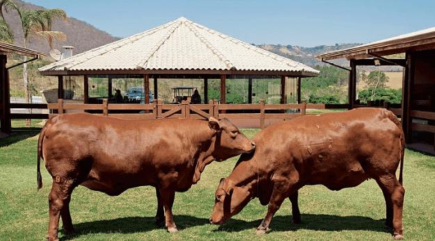 Registro genealógico para gado garante a qualidade genética do rebanho