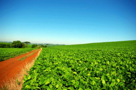 Saiba mais sobre o uso da soja no confinamento de gado